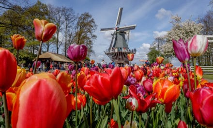 Keukenhof Gardens: The Highlight of the Tulip Season in Holland