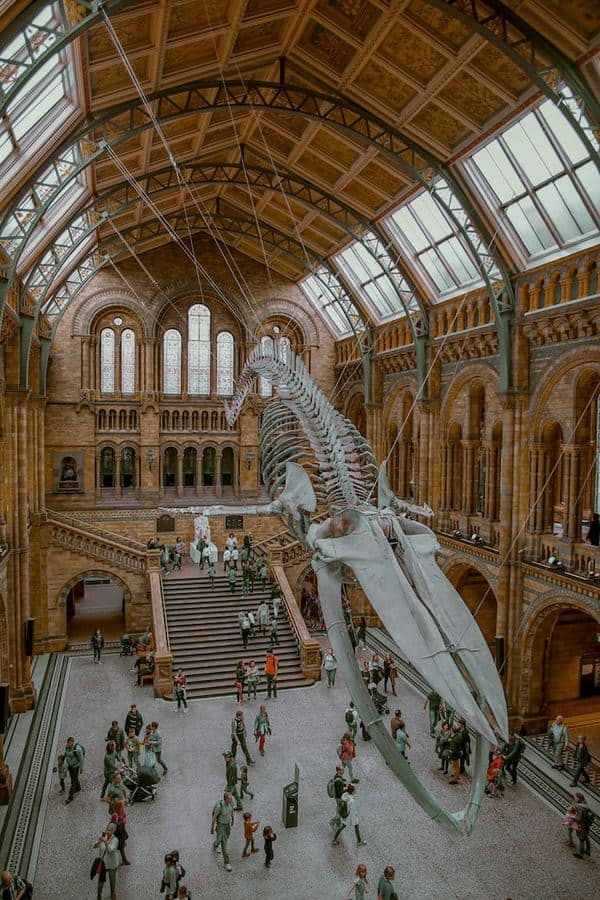 Places to visit in London and Best Things to Do in London (UK) - Natural History Museum