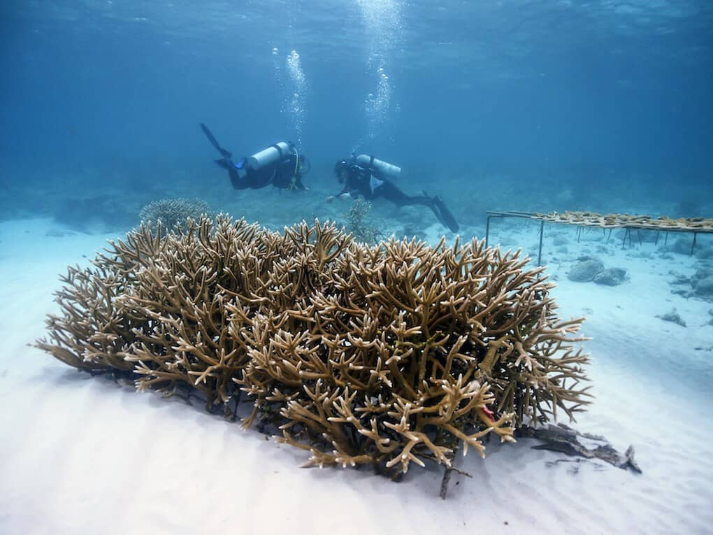 Coral Reef Rehabilitation Project in Punta Cana