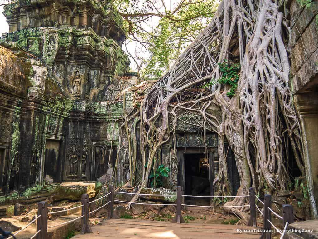 Ta Prohm Temple in Angkor Siem Reap