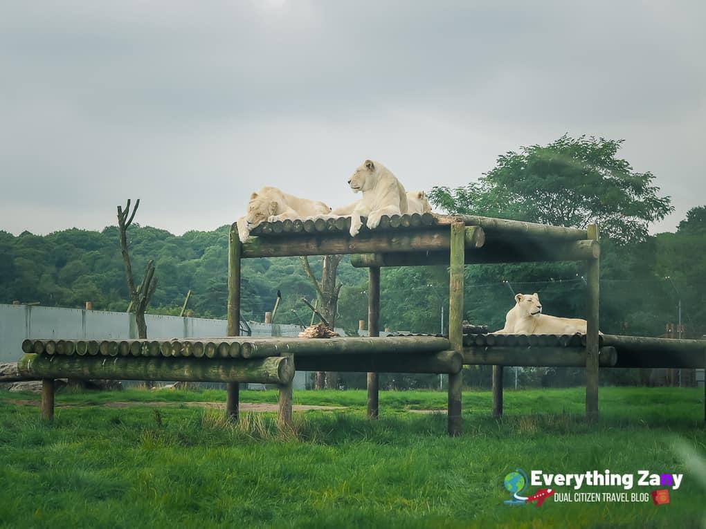 West Midlands Safari Park in Bewdley Worcestershire